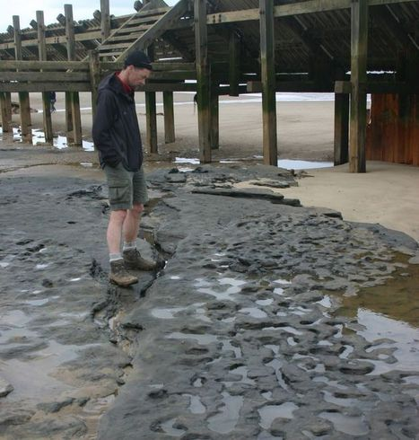 Oldest Human Footprints Found Outside of Africa | historian: science and earth | Scoop.it