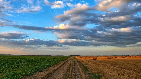 5 axes pour transformer l'agriculture et l'élevage au Mali | Questions de développement ... | Scoop.it