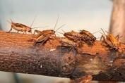 L'entomophagie : Belle réussite pour la conférence dégustation d'hier !   Entomophagy: Edible Insects and the Future of Food   Scoop.it
