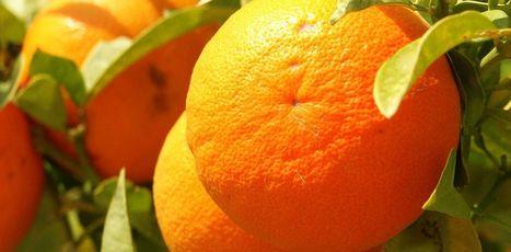 La vitamine C, une molécule audouble visage | Dr. Goulu | Scoop.it