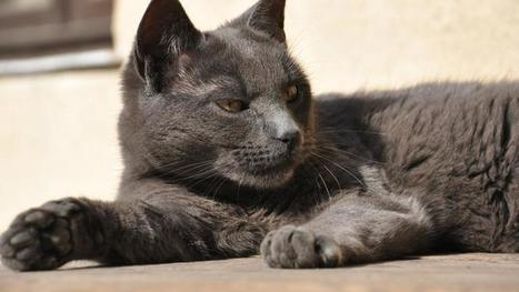 Expulsés de leur maison par leur chat méchant | www.directmatin.fr | CaniCatNews-actualité | Scoop.it