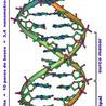 biología 4° año