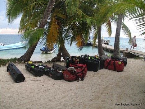 The BBC at Carrie Bow Caye, Belize | Filmbelize | Scoop.it
