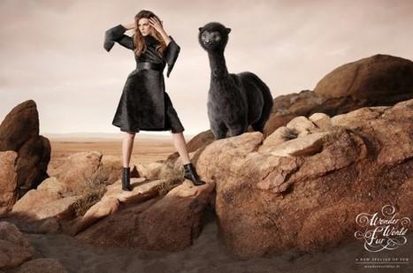 WWF – Wonder World Fur | Branding Marketing Products | Scoop.it