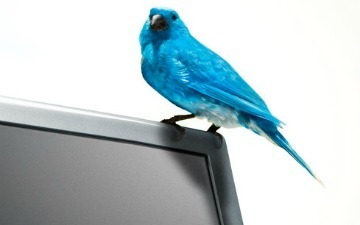 Twitter Rules the Photo-Sharing Roost ... on Twitter [STATS]   Social Media Buzz   Scoop.it