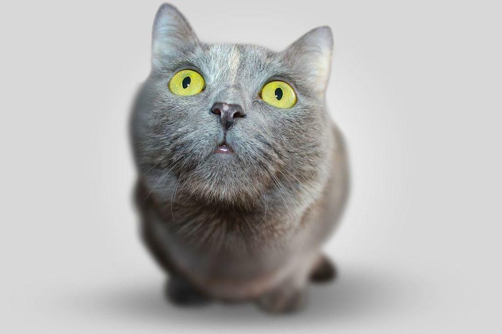 Les chats sont aussi empathiques et nous aident à guérir