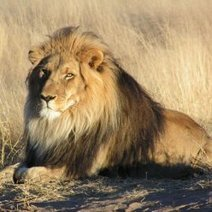 Dollar Value of Hunted African Animals: Photos : DNews | Life on Earth | Scoop.it