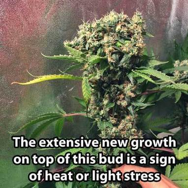 grow weed easy  in Grow Weed Easy  Page 2   Scoop itgrow weed easy  in Grow Weed Easy  Page 2   Scoop it. Aerogarden Weed Harvest. Home Design Ideas