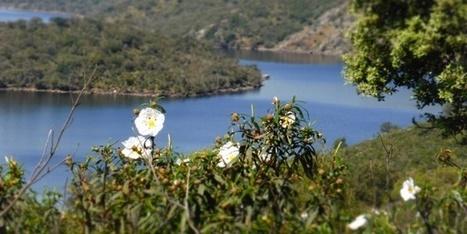España no logrará detener la pérdida de biodiversidad, según Ecologistas en Acción | Ecología - Dietética  y Nutrición | Scoop.it