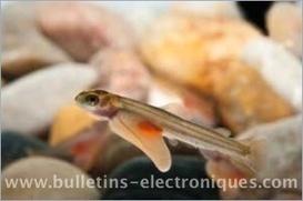 Vers une aquaculture plus respectueuse de l'environnement pour le saumon d'élevage   Actualité de l'Industrie Agroalimentaire   agro-media.fr   Scoop.it