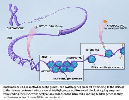 Genetics is so last century › Bernie's Basics (ABC Science) | SJC Science | Scoop.it
