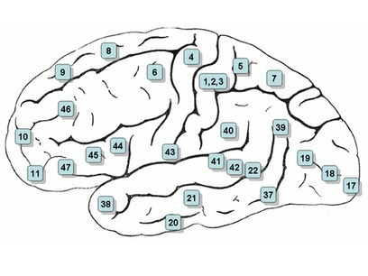 Psychologie cognitive et Neurosciences: Se repérer dans le cerveau   Cognitive Psychology. Cognitive and behavioural Neuroscience   Scoop.it