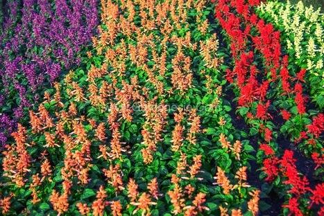 Buy Flower Seeds online India' in Online Garden Store in