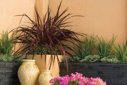 Create beautiful containers : Home-and-garden | botany | Scoop.it
