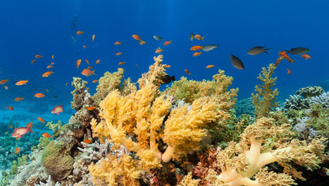 5 outlandish ideas for saving coral reefs | scubadiving | Scoop.it
