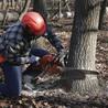 Fox Valley Tree Care