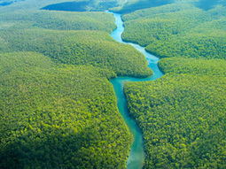 What is a Tropical Forest?   Rainforest Alliance   Resilience of systems   Scoop.it