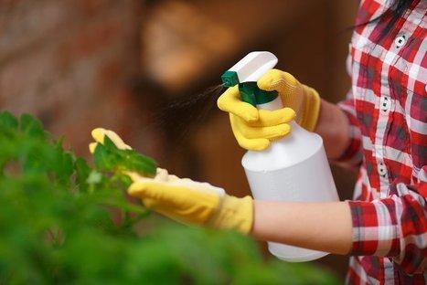 Face à Monsanto, des Français dégainent le Beloukha : un désherbant redoutable... et 100% naturel ! | Les colocs du jardin | Scoop.it