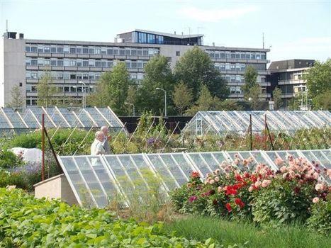 Heeft stadslandbouw de toekomst? « Visionair.nl | eetbaar amsterdam | Scoop.it