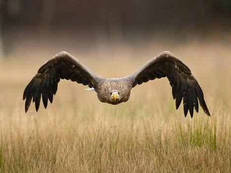 14 Big Birds Captured in Action - y SIMPLEMENTE ESPECTACULAR (2) | I didn't know it was impossible.. and I did it :-) - No sabia que era imposible.. y lo hice :-) | Scoop.it