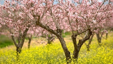 Happy Tu Bishvat, the new year for trees | Sustainable Futures | Scoop.it