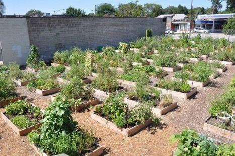 Raised Beds Make Good Garden Sense | School Gardening Resources | Scoop.it