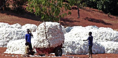 Burkina Faso 2016/17 cotton crop seen rising to 750,000 tonnes -minister | Grain du Coteau : News ( corn maize ethanol DDG soybean soymeal wheat livestock beef pigs canadian dollar) | Scoop.it