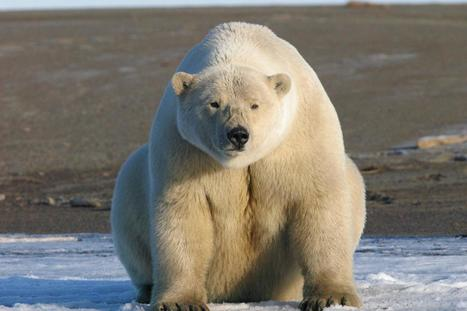 What satellites can tell us about how animals will fare in a changing climate   Gaia Diary   Scoop.it