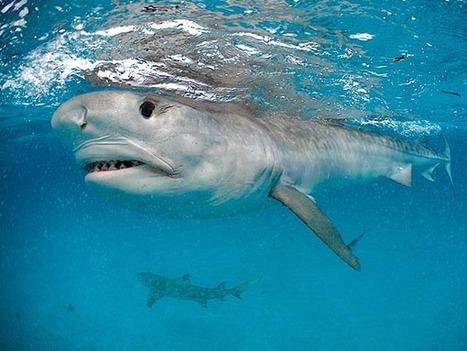 Se lo squalo divora gli uccellini | Adventure Travels & Photo Tales | Scoop.it