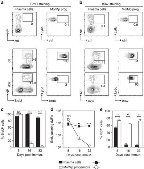Mature IgM-expressing plasma cells sense antigen and develop competence for cytokine production upon antigenic challenge | Immunology | Scoop.it