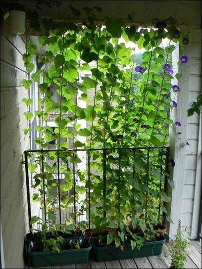 10 Ideas For A Beautiful Balcony Garden The L
