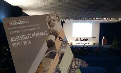 Crise aviaire: l'heure du bilan palmipèdes chez Maïsadour | Agriculture Aquitaine | Scoop.it