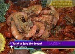Ocean conservation org: 'stop eating shrimp' | ocngirl | Scoop.it