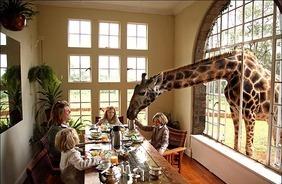 Kenya: The Giraffe Manor, Nairobi | Wicked! | Scoop.it