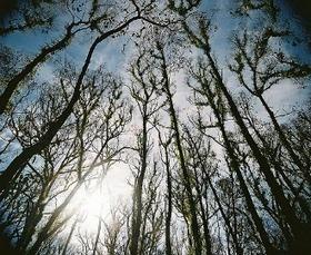 When Trees Die, People Die | HINGOL NATIONAL PARK! | Scoop.it