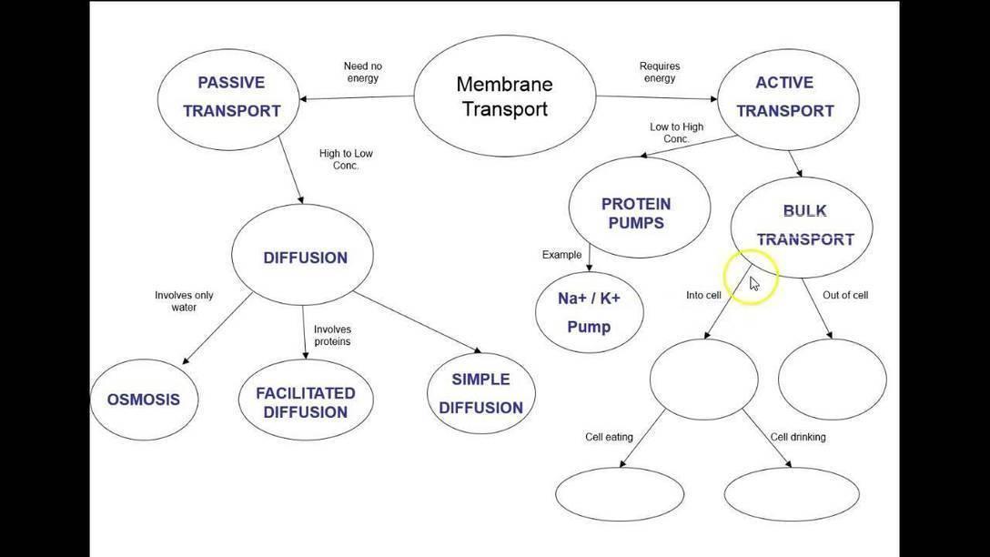 Answers Membrane Transport Concept Map Mind