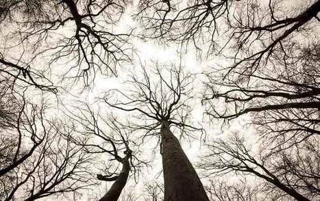Silvicultor alemán descubre 'redes sociales' de los árboles | Live different taste the difference | Scoop.it