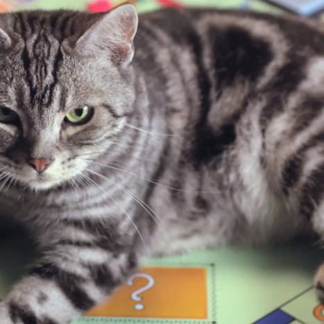 New Hasbro Ad for Monopoly Cat Piece Is Purrfection [VIDEO] | Les chats c'est pas que des connards | Scoop.it