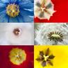 Digital Photography (Nikon)