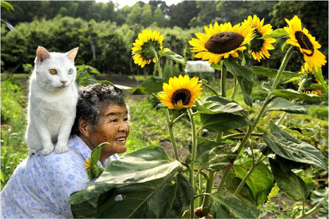 Japanese Grandma and Her Odd-Eyed Cat are a Match Made in Heaven | What makes Japan unique | Scoop.it