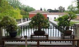 Jornada sobre Iris en el Real Jardín Botánico de Madrid | ACANTO Green News | Scoop.it