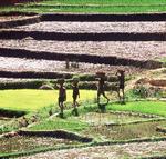 Les agrosystèmes : des réservoirs de biodiversité à valoriser - Institut de recherche pour le développement (IRD) | Environnement et développement durable, mode de vie soutenable | Scoop.it