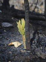 La gran sequía en el Suroeste de Estados Unidos: un mal augurio para los bosques del planeta : Environment 360 | Geografía | Scoop.it