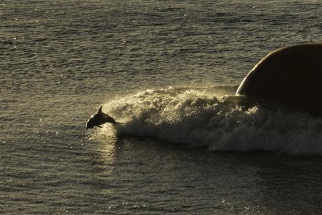 Catturare i delfini in un click! Lou Vest | Nautica-epoca | Scoop.it