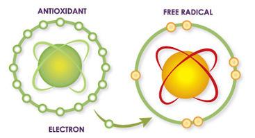 Apa itu Antioksidan dan Apa Fungsinya? | Kolom Sehat - Tips Kesehatan Harian | Scoop.it