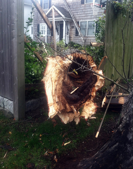 Hurricane Sandy Unleashes Fury and Leaves a Mess | Urban Gardens | Annie Haven | Haven Brand | Scoop.it