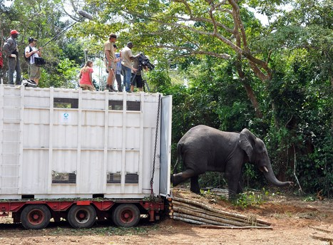 Endangered elephants in Ivory Coast given lifeline | nature and life lessons | Scoop.it