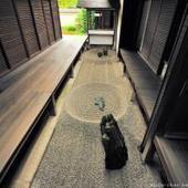 Japanese superlatives, Totekiko, the smallest Japanese Zen rock garden | A Love of Japanese Gardens | Scoop.it