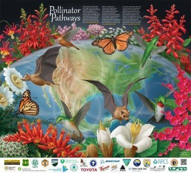 Pollinators Home Page - U.S. Fish and Wildlife Service | Pollinators: a plant focus, for backyards | Scoop.it