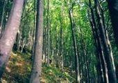 La risorsa legno per l'ambiente - Alternativa Sostenibile   scatol8®   Scoop.it